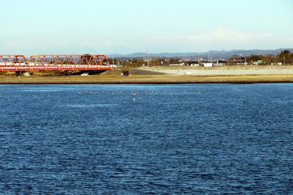 河口付近の鳥たち